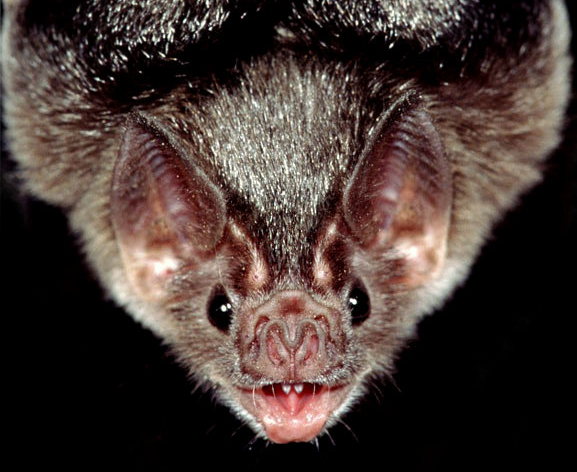 The bat that flits at the close of eve has left the Brain that won't Believe.